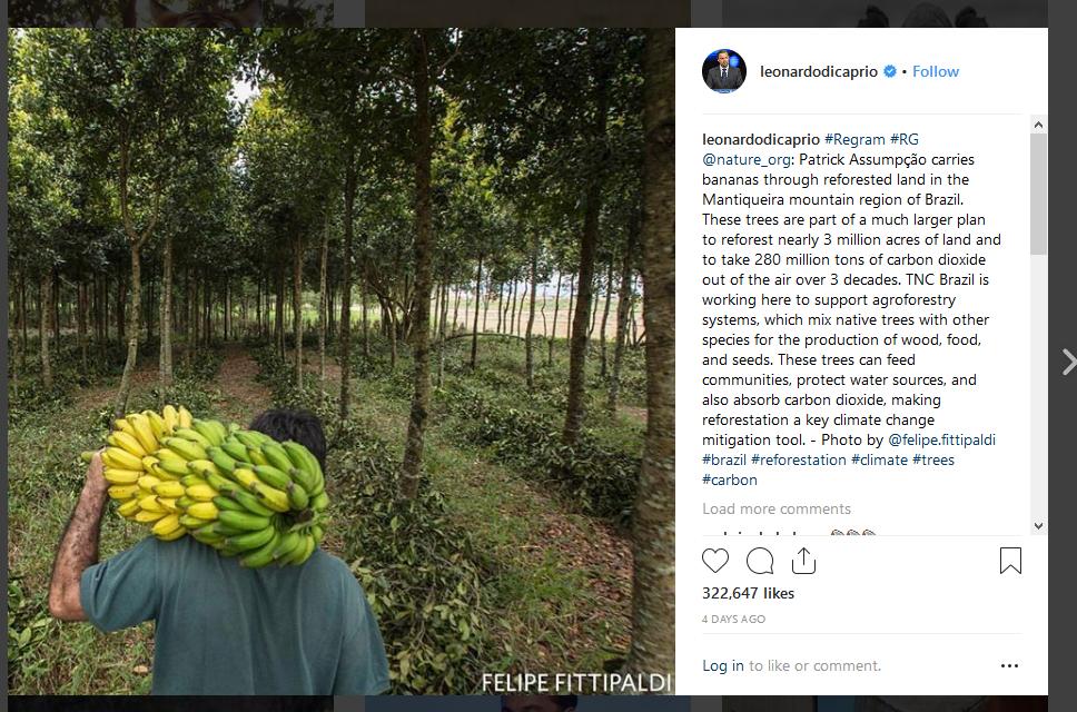 گزارش دی کاپریو از احیای جنگلها در برزیل
