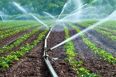 11 هزار و 870 میلیارد تومان تسهیلات به بخش کشاورزی استان مرکزی