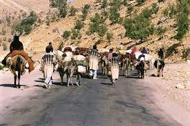 تمدید زمان استقرار عشایر کوچرو در مناطق قشلاقی