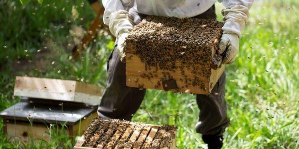 اجرای طرح پایش باقیماندههای دارو در عسل از زنبورستان های شهرستان شهربابک