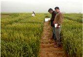 یافتههای اثربخش کشاورزی، ترویج شود