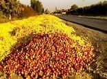 برپایی مراکز خرید سیب صنعتی بدون اخذ مجوز از جهاد کشاورزی در حاشیه جاده ها ممنوع است