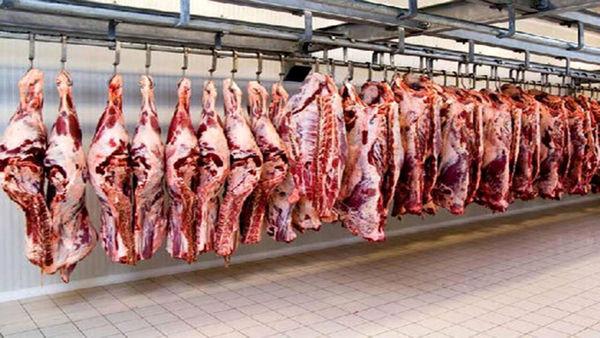 تولید بیش از ۴۳۰۰ تن گوشت قرمز توسط دامداران منطقه کاشان