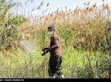 مبارزه با ملخ در 250 هکتار عرصه طبیعی شهرستان جاجرم