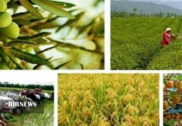 توسعه بخش کشاورزی مستلزم تقویت تشکل های منسجم