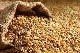 نیاز دامداریهای خراسان شمالی به ۱۳۰ هزار تن جو