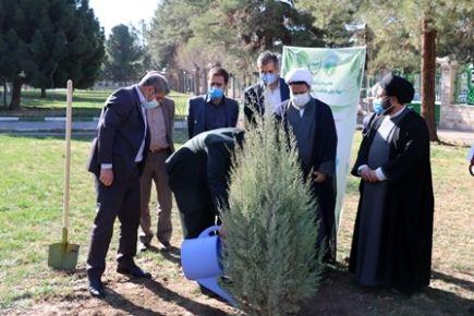 کاشت نهال به دست امام جمعه کرمان در روز درختکاری