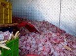 کشف و معدومسازی حدود یک تن کله و پای مرغ غیر بهداشتی