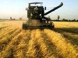 تولید 7 تن گندم دیم در هر هکتار توسط گندمکار نمونه گلستانی