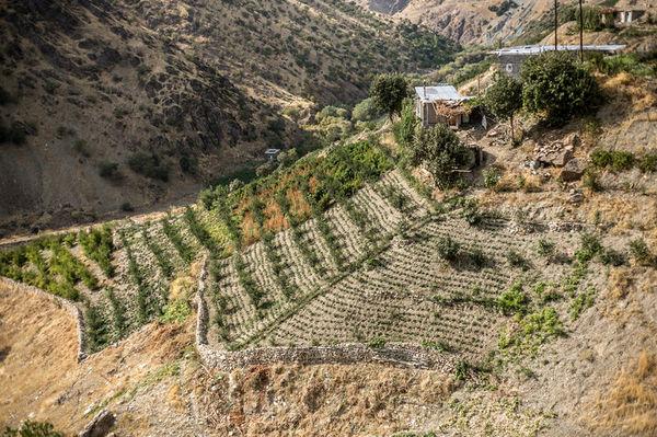 ۶۱ درصد از اراضی ملی استان سنددار شدند