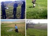 آغاز مبارزه با علف های هرز در مزارع شهرستان بدره
