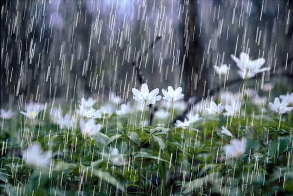 بهبود 12 میلیمتری بارندگیها در یک ماه اخیر