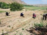 شهرکرد مجری طرح احداث باغچههای سلامت