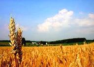 برگزاری کارگاه آموزشی شناسایی و مدیریت علفهای هرز مزارع گندم