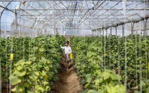 ۳۰ درصد کشاورزان نمونه خراسان شمالی تحصیلات دانشگاهی دارند