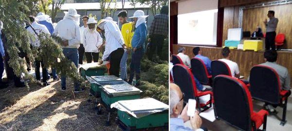 کارگاه آموزشی استحصال زهر زنبور عسل در دماوند برگزار شد