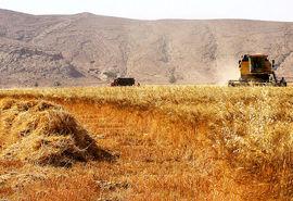 آغاز بزرگترین پروژه بازرگانی کشور از استان بوشهر/ پول اولین محمولههای گندم پرداخت شد