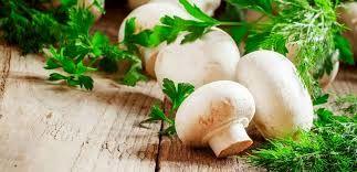 سالانه ۴۳۰۰ تن قارچ در استان کردستان تولید میشود