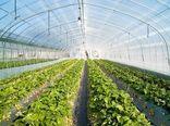چهارمحال و بختیاری رتبه برتر توسعه واحدهای گلخانهای را کسب کرد