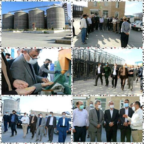 بازدید از شرکت تولید بذر مائده توسط سرپرست معاونت زراعت وزارت جهاد کشاورزی