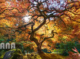 باغ ژاپنی پورتلند در اورگان