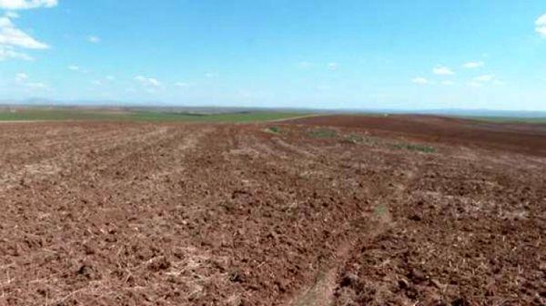 درد خشکسالی بر تن زخمی مزارع کردستان