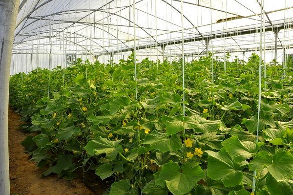 بازدید کارشناس دیوان محاسبات از سه طرح گلخانه و یک طرح پرورش بوقلمون در شهرستان نرماشیر