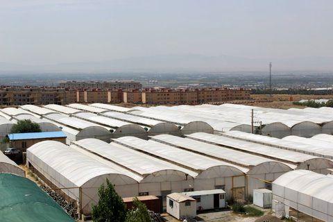ساخت سازه و بهره برداری از 5500 هکتار شهرکهای کشاورزی در شش سال اخیر