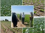 بازدید رییس سازمان جهاد کشاورزی استان قزوین از یک مزرعه مدرن در آبیک
