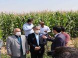 ساماندهی زایندهرود برنامه اصلی مدیریت توزیع آب کشاورزی اصفهان است