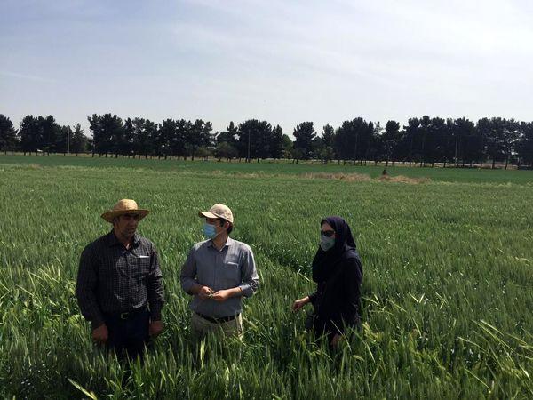 مبارزه شیمیایی علیه علف های هرز در 2140هکتار از مزارع غلات شهرستان تهران