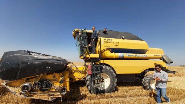 برداشت گندم از مزارع کشاورزی شهرستان آبیک آغاز شد
