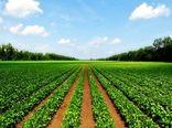 سالانه ۱۵۰۰ تن محصولات کشاورزی در استان بوشهر تولید میشود