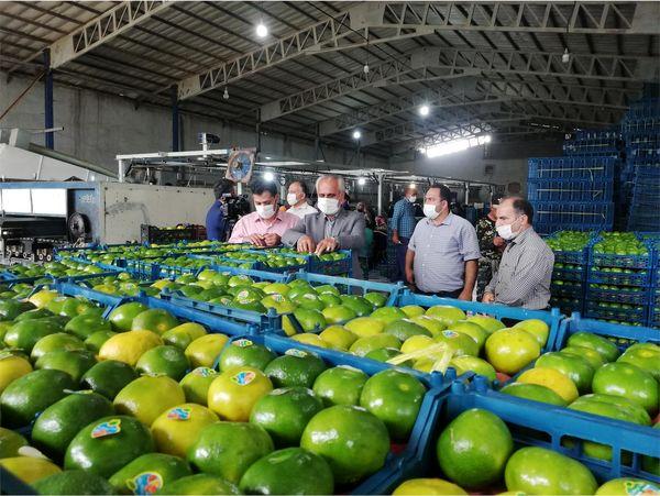 2500 تن نارنگی پیش رس از میاندورود به خارج کشور صادر شد