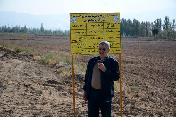 آغاز عملیات کاشت مزرعه گندم طرح الگویی پایلوت تغذیه گیاهی کشور در استان آذربایجان شرقی