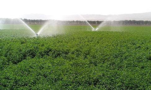تجهیز بیش از ۱۳ هزار هکتار از اراضی کشاورزی گیلان به سامانه های نوین آبیاری