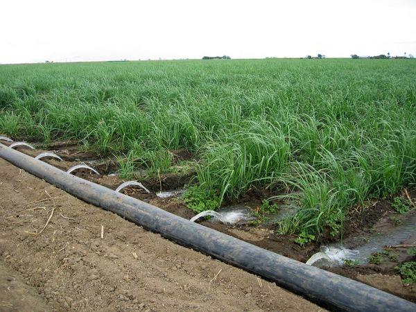 اجرای آبیاری نوین در بیش از چهار هزار هکتار اراضی کشاورزی یزد