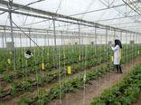 رونق تولیدات گلخانه ای فریدونشهر در گرو حمایت دولت