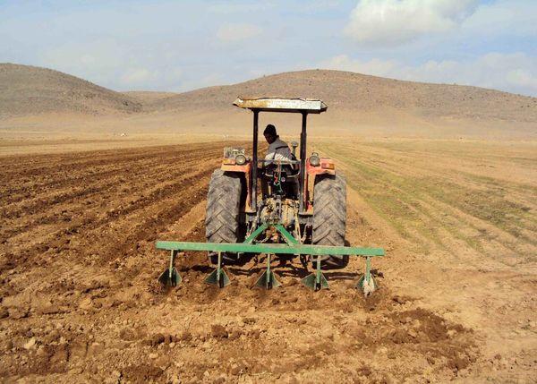 کشت نخود دیم در اراضی کشاورزی کردستان آغاز شد