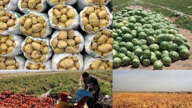 ۵۹ درصد از کل صادرات کردستان محصولات کشاورزی بوده است