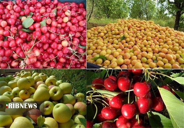 برداشت ۴۰ هزار تن محصولات باغی هسته دار در کردستان