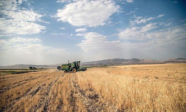 خرید تضمینی بیش از ۱۹ هزار تن گندم در خراسان جنوبی