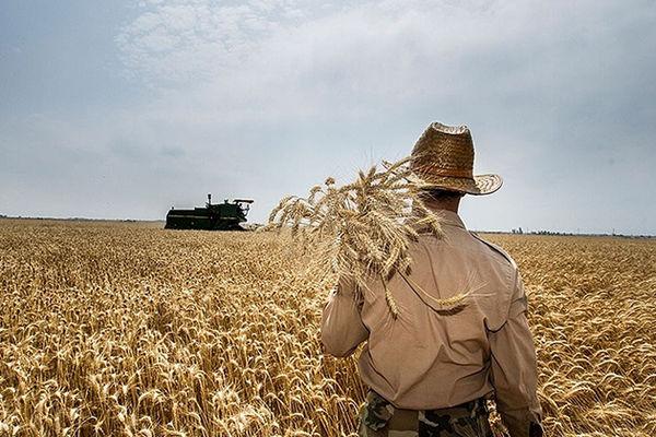 افزایش 130 درصدی خرید گندم در مناطق روستایی چهارمحال و بختیاری