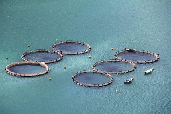 تولید بیش از 2000 تن ماهی به روش پرورش در قفس در چهارمحال و بختیاری