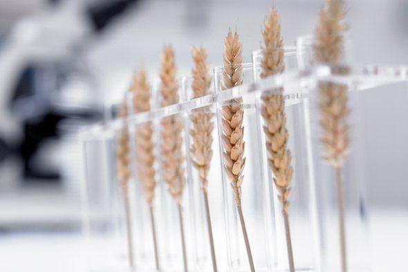بیوتکنولوژی آینده کشاورزی است، نه تراریخته!