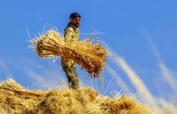 جوان روستایی هم سرمایه هم نیروی کار