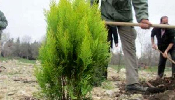 غرس بیش از 1000 اصله نهال در شهرستان کوهرنگ