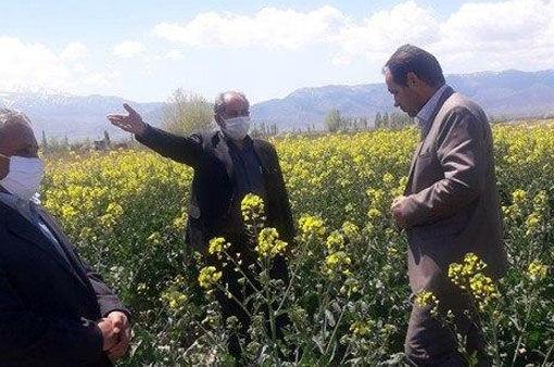 افزایش ۳۰ درصدی عملکرد مزارع در صورت مبارزه با آفات ، امراض و علفهای هرز مزارع