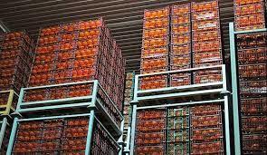 ذخیره سازی 14 هزار تنی مرکبات در میاندورود