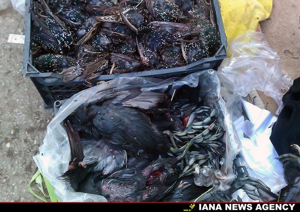 تجارت میلیاردی و مخوف پرندگان مهاجر